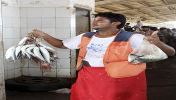 صحيفة: أزمة أسماك خانقة في اليمن