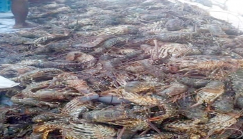 صيد جائر لأسماك مهددة بالانقراض