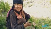 الضالع.. قصة كفاح مسنّة دون معيل في مواجهة مصاعب الحياة (تقرير خاص)
