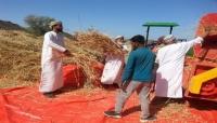 إنتاج سلطنة عُمان السنوي من القمح يزيد 132%