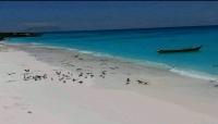 صيادو سقطرى يستنكرون إقحام جزيرة درسة في أعمال عسكرية