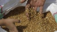 جماعة الحوثي تقول إنها أتلفت كمية كبيرة من البذور الفاسدة مقدمة من الأمم المتحدة