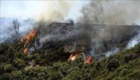 حرائق الغابات.. الجزائر توقف 16 عنصرا بحركة انفصالية
