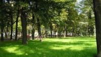 الطبيعة الخضراء لها تأثير السحر للتخلص من التوتر والاجهاد